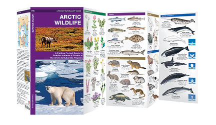Arctic Wildlife 9781583558294  Waterford Press   Natuurgidsen Spitsbergen, Jan Mayen, Noordpool